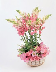 Snapdragons and Assorted Miniatures in a Basket