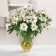 Dazzling Daisy Get Well Vase
