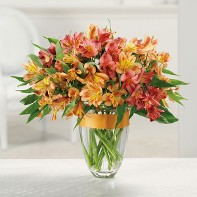 Awesome Alstromeria Get Well Vase