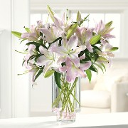 Nothing but Glorious Lilies