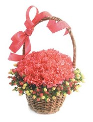 Pave Carnations w/ Hhypericum Collar in a Basket