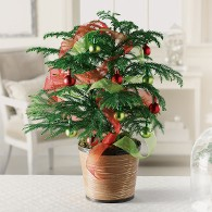 Holiday Decorative Pine Tree
